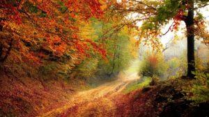 autumn_640v2