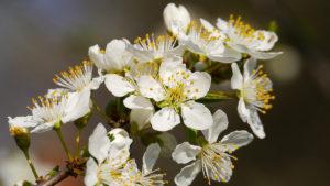 spring_640