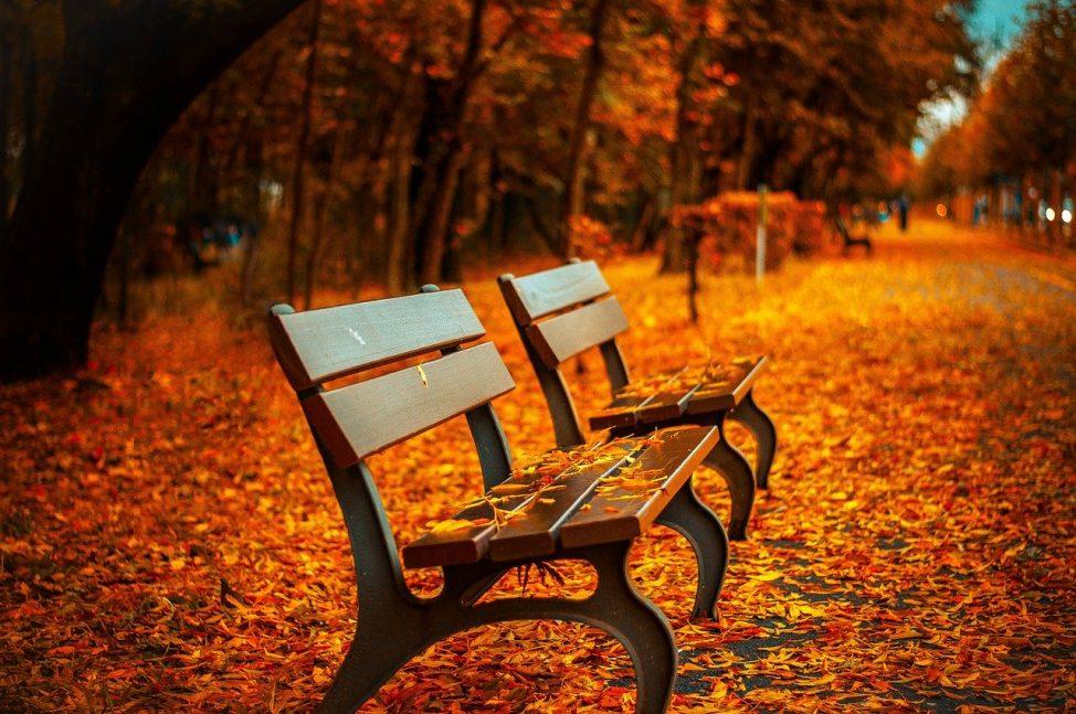 82-autumn